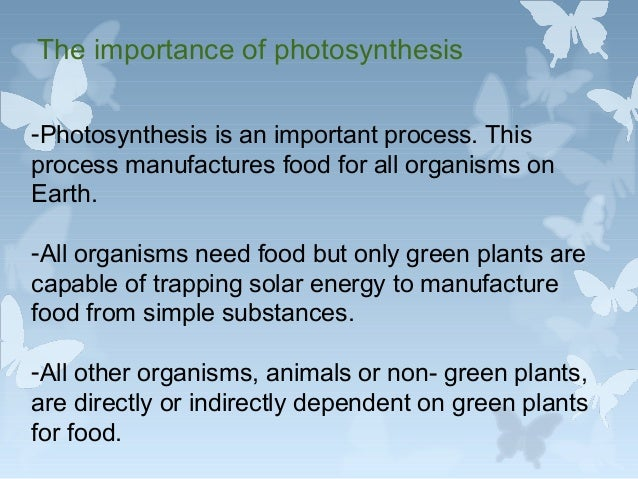 Why Is Photosynthesis Important?