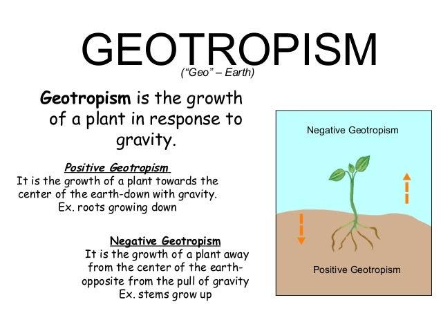 Plants Movements