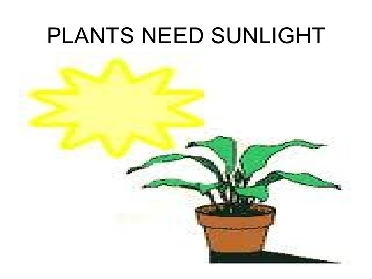 Top 28 Plants That Need Sun Dress Up Your Home With