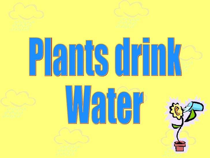 Plants drink Water