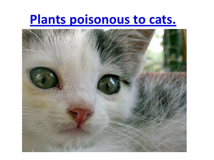 Plants poisonous to cats Houseplants not toxic to cats