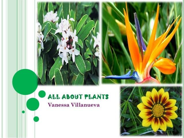 ALL ABOUT PLANTS Vanessa Villanueva