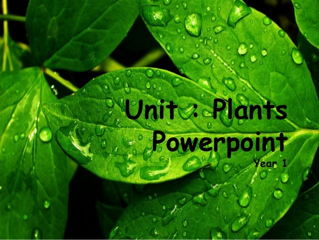 Unit : Plants  Powerpoint          Year 1