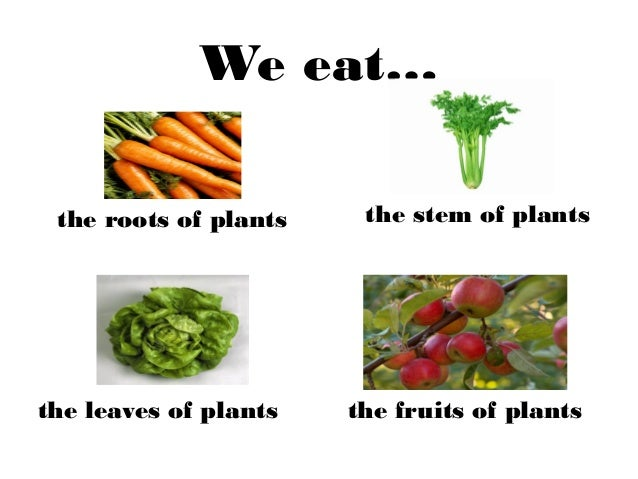 What are stem vegetables?