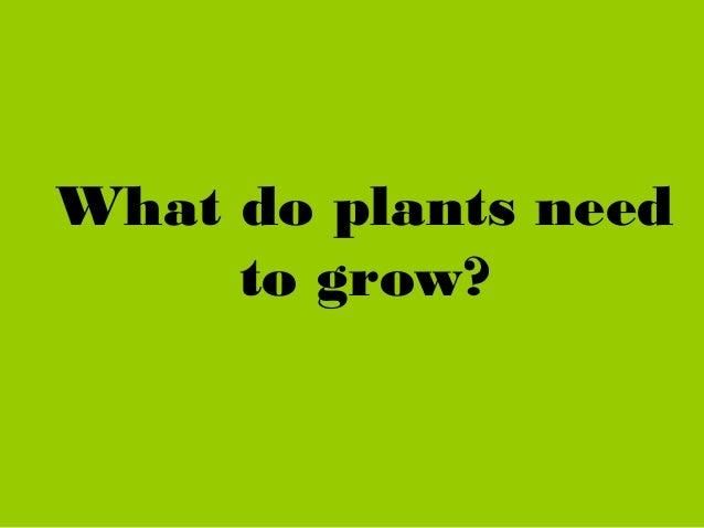 Plants powerpoint and interactive activities Slide 3