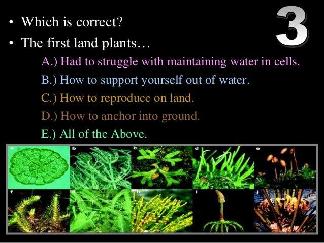 The Plant Kingdom Essay Sample