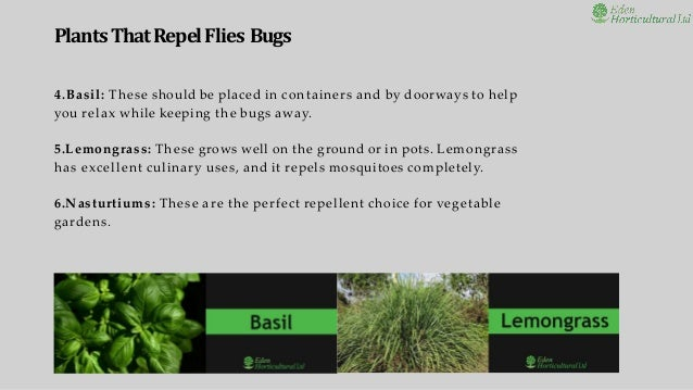 Plants That Repel Flies Mosquitoes And Bugs