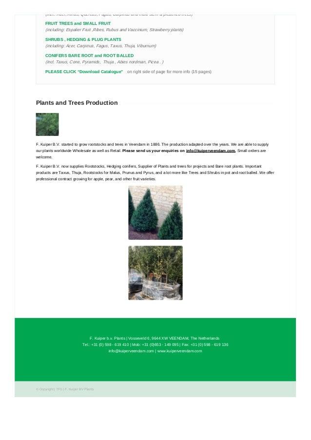 Plants & Trees Nursery Near Me | Trees and Shrubs For Sale
