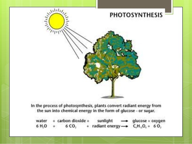 Plant structure function and transport 8 ccuart Images