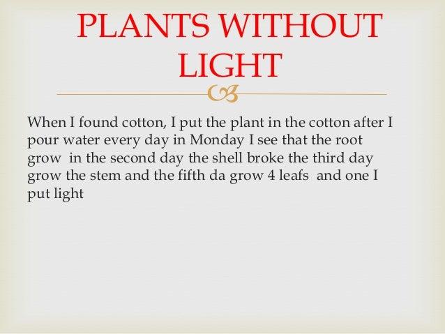 Plants without light Slide 3