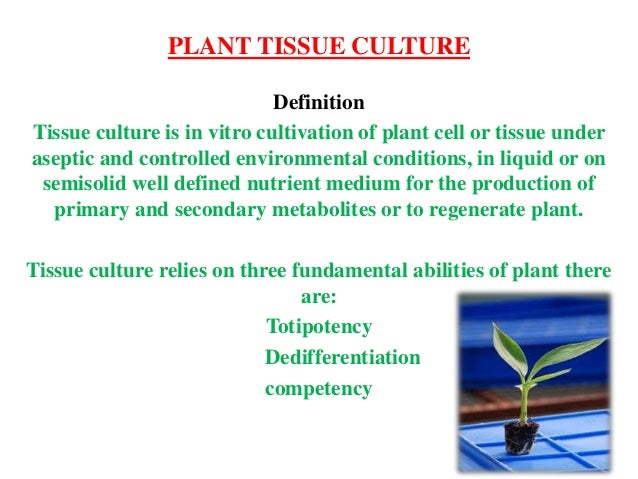 plant tissue culture by thanuja