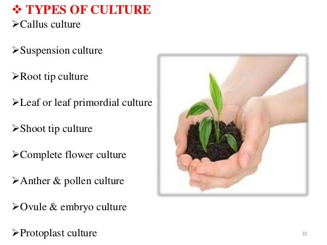 Research Paper on Plant Tissue Culture