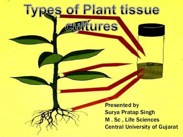 how to make plant tissue culture at home