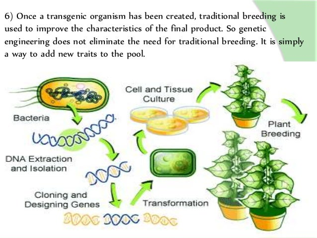 the advantages and disadvantages of genetic manipulation Genetic engineering is a new technology that allows sets of cells in an organism to be modified and altered in order to achieve desired traits and possibly even.
