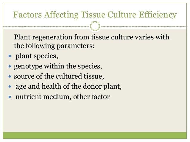 Requirements for plant tissue culture |authorstream.