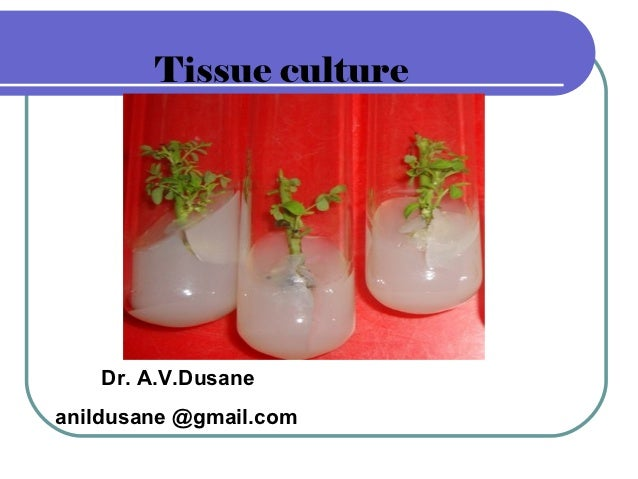 Tissue culture   Dr. A.V.Dusaneanildusane @gmail.com