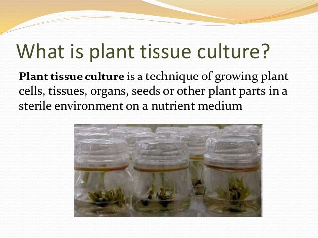 subculturing in plant tissue culture pdf