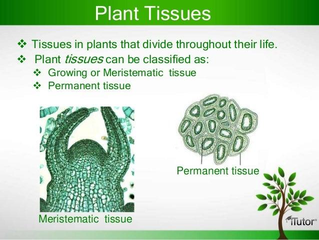 plant tissue diagram Plant tissue culture 1 tissue culture dr avdusaneanildusane @gmailcom 2 cultures cell culture agriculture hydroponics.