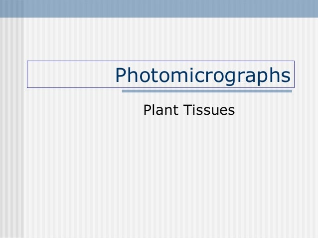Photomicrographs Plant Tissues
