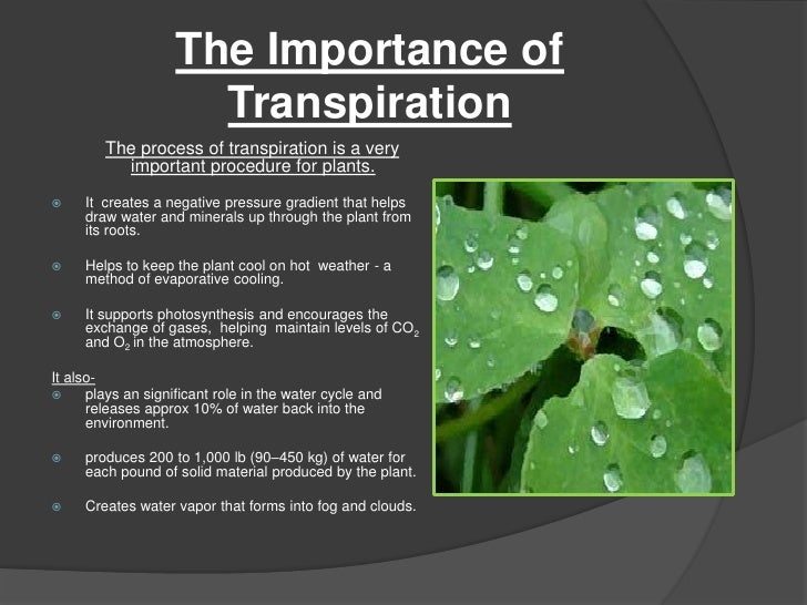 role de la transpiration
