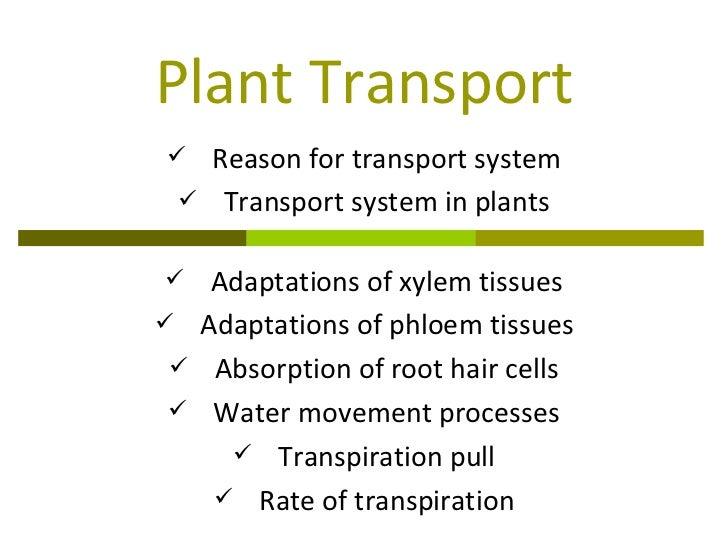 Plant Transport <ul><li>Reason for transport system </li></ul><ul><li>Transport system in plants </li></ul><ul><li>Adaptat...