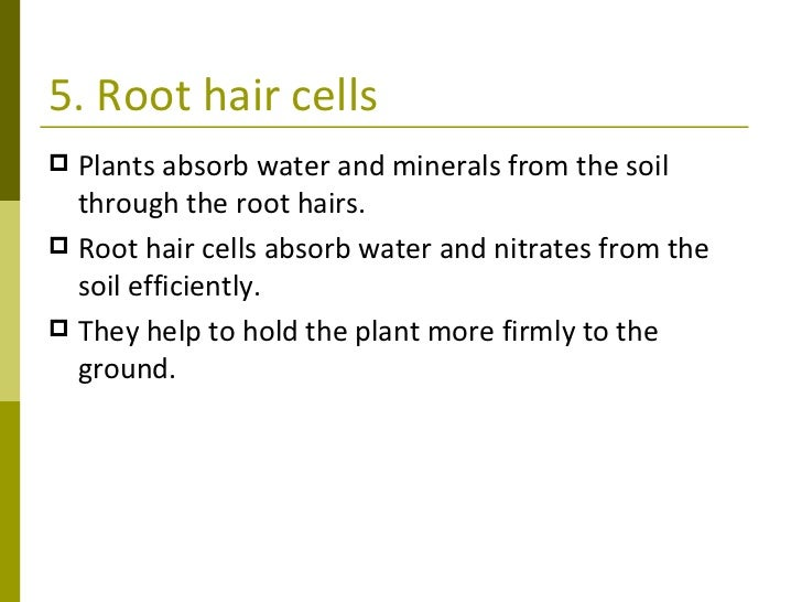 Plant transport 9 5 root hair cells ccuart Choice Image