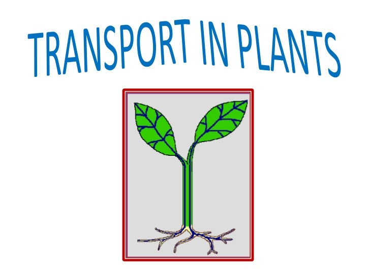 1) Transport in plants