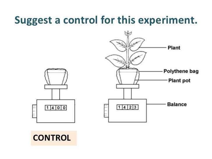 plant stomata