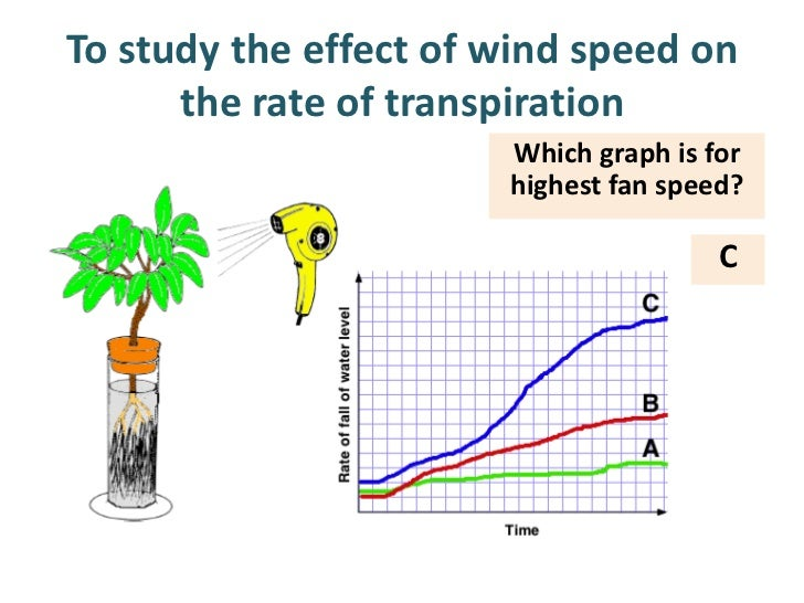 effect of temperature on the rate of transpiration Many gardeners and farmers ask themselves, what factors affect plant transpiration if you have been asking yourself this question, read on to learn the answer slide 1 of 10 transpiration is the process in which water evaporates from plants it occurs during photosynthesis when the leaves.