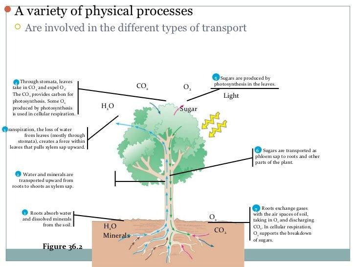 Tact diagram biology electrical work wiring diagram plant transport nadeem ashraf jarpal rh slideshare net structural diagrams for biology biology diagrams to label ccuart Images