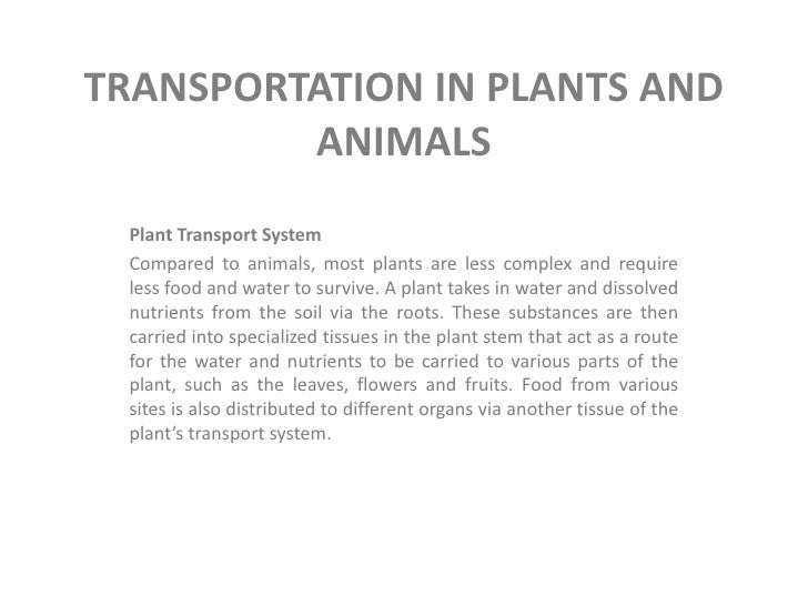 TRANSPORTATION IN PLANTS AND         ANIMALS Plant Transport System Compared to animals, most plants are less complex and ...