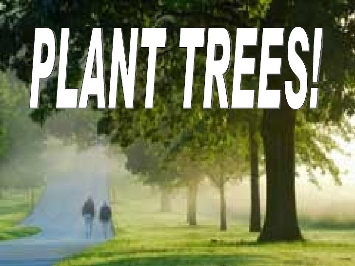 Plant Trees for Celebration     Plant trees for celebration of birthdays, anniversaries, new birth,     or any special occ...
