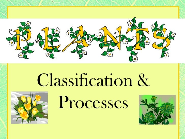 Classification & Processes