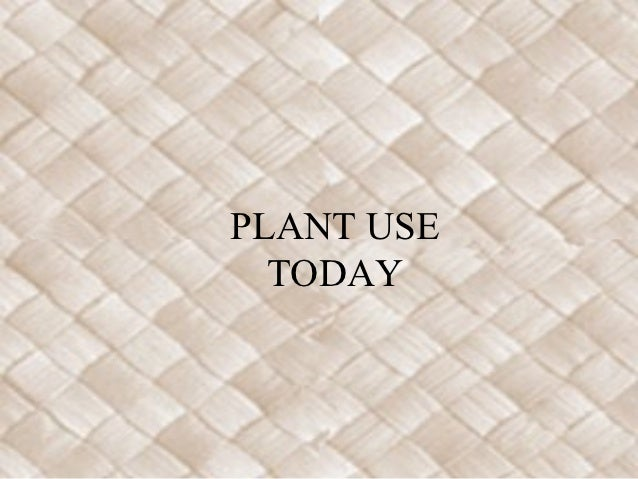 PLANT USE  TODAY