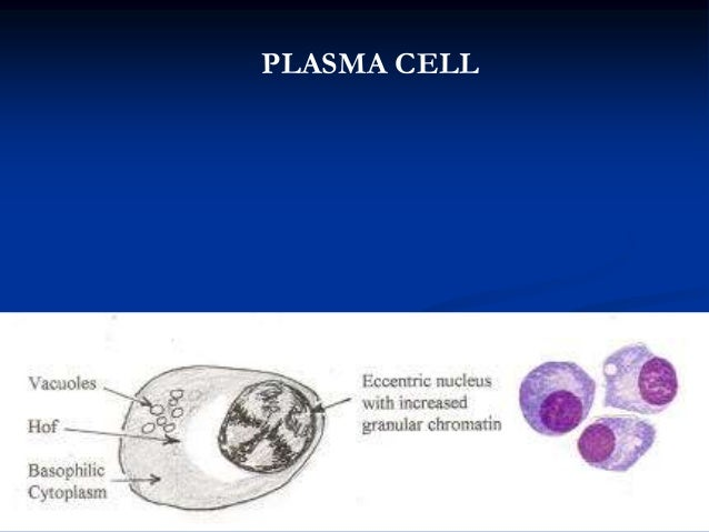 Plasma cell disorders Multiple Myeloma