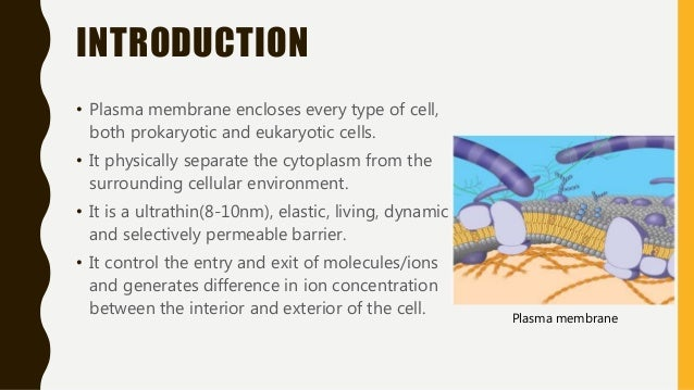an introduction to the cell membrane A cell membrane, plasma membrane or plasmalemma is a selectively permeable lipid bilayer coated by proteins which comprises the outer layer of a cell the plasma membrane works between the.
