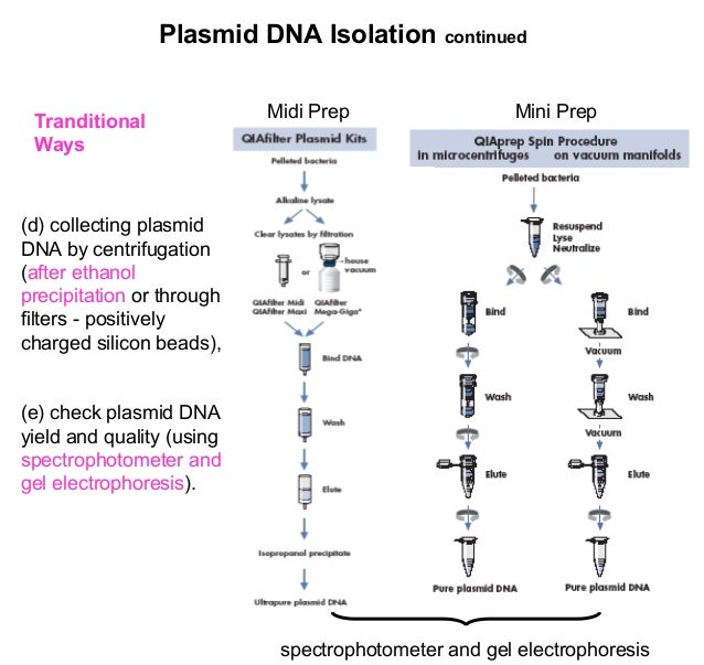 Extraction of plasmid dna