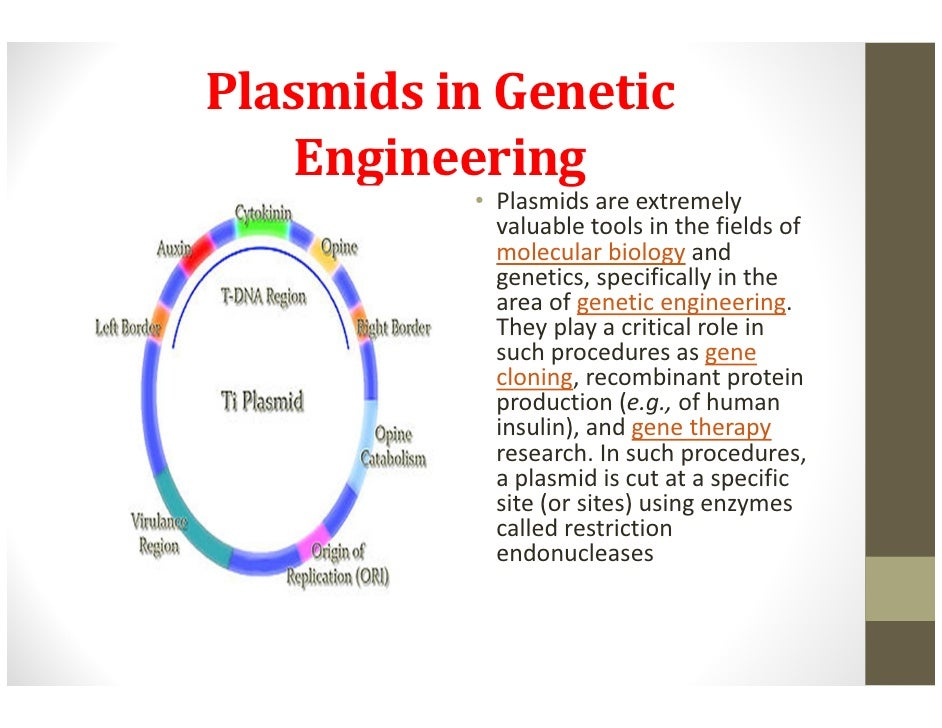 advantages of genetic engineering Genetic engineering offers a time-saving method for producing larger, higher-quality crops with less effort and benefits versus risks of genetically modified plants.