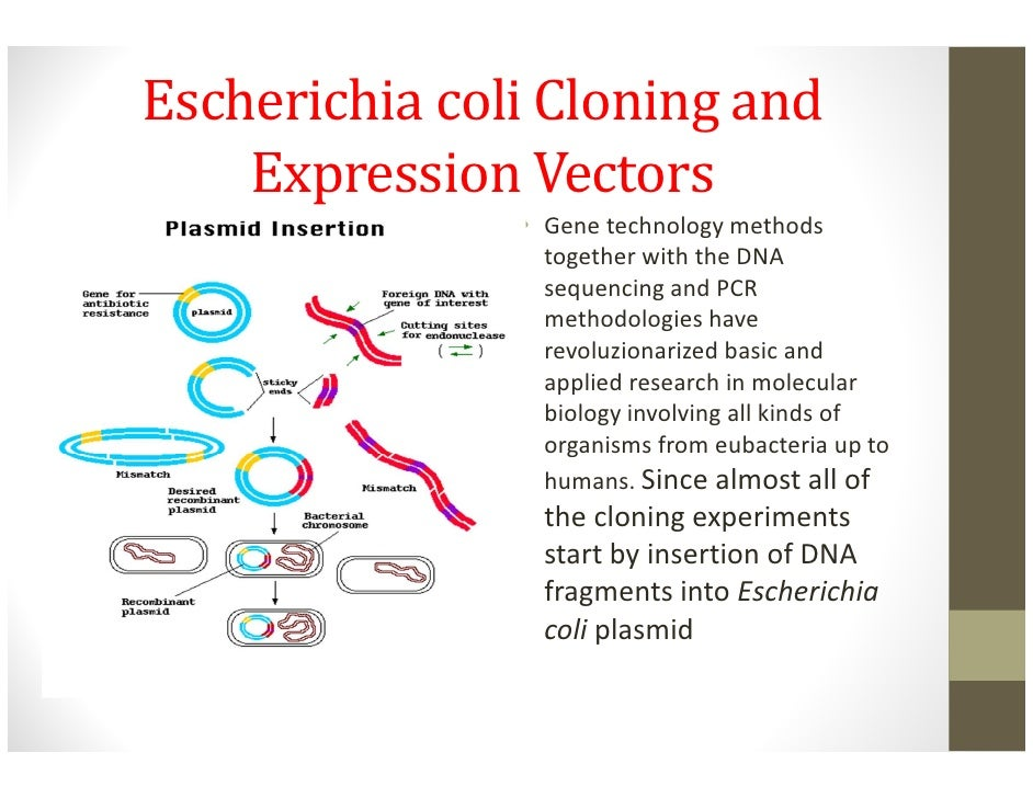 a research on extracting dna from the bacterium escherichia coli Amplification of ndvb gene and biofilm formation studies in escherichia coli of ecoli genomic dna was extracted from its flagella allows bacteria.