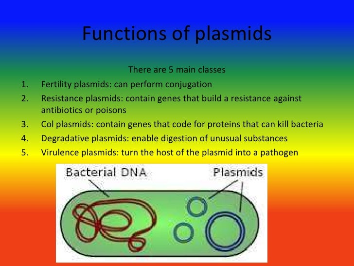 S1 Mapping as well Gut Health Confused Danielle Registered Dietitian Explains as well Show Recaps The Power Of Disease Prevention likewise Ppar Review Audio Slides V5 likewise Guava Nutrition Table. on dna digestion