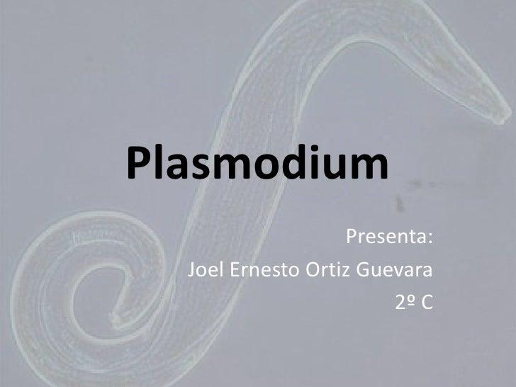 Plasmodium<br />Presenta: <br />Joel Ernesto Ortiz Guevara<br />2º C<br />
