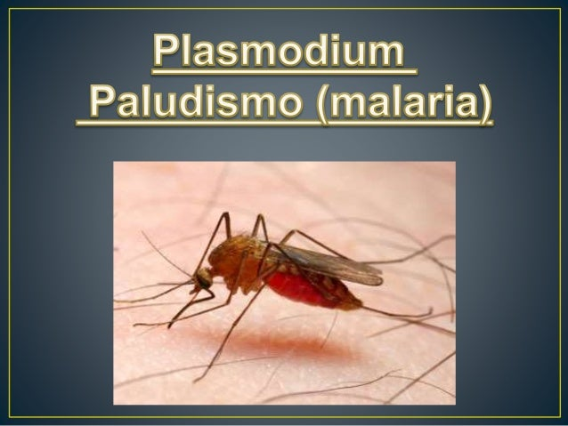 Taxonomía Dominio: Eukaryota Reino: Chromalveolata Superfilo: Alveolata Filo: Apicomplexa Clase: Aconoidasida Orden: Haemo...