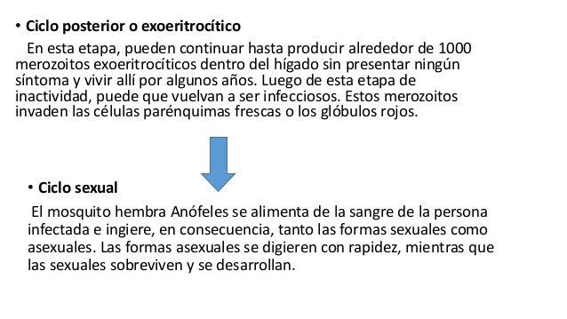 Ciclo asexual del plasmodium vivax