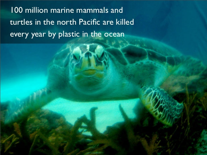 Image result for plastic killing sea animals
