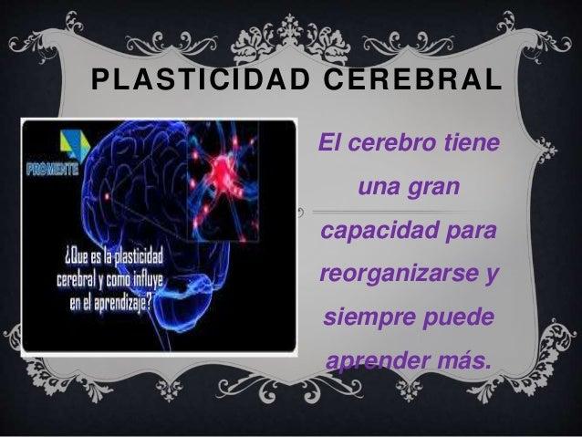 PLASTICIDAD CEREBRAL  El cerebro tiene  una gran  capacidad para  reorganizarse y  siempre puede  aprender más.