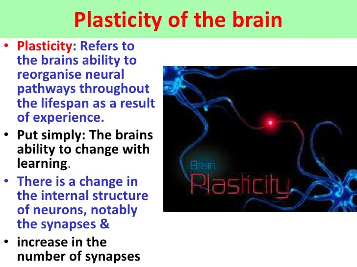 Plasticity of the brain• Plasticity: Refers to  the brains ability to  reorganise neural  pathways throughout  the lifespa...