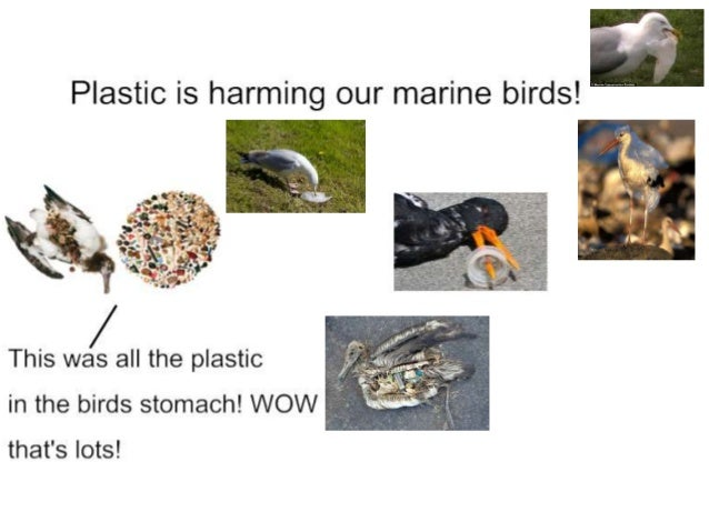 Plastic in M.R.P.S All the rubbish we collected in fifteen minutes BAN PLASTIC BAGS This is the plastic found in our schoo...