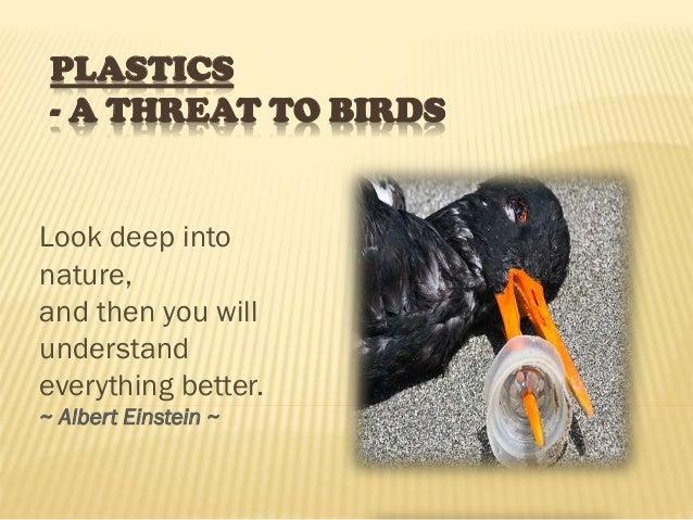 PLASTICS - A THREAT TO BIRDS Look deep into nature, and then you will understand everything better. ~ Albert Einstein ~