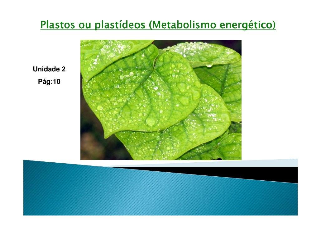 Plastos ou plastídeos (Metabolismo energético)Unidade 2 Pág:10