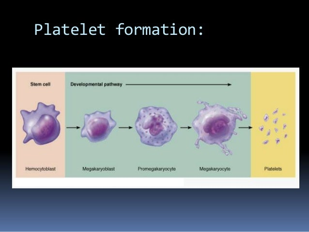 Platelet And Coagulation Disorder